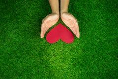 Руки держа красное сердце на предпосылке зеленой травы Стоковое Фото