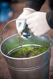 Руки держа металл bucket вполне ростков дерева Стоковое Изображение RF