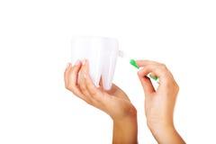 Руки держа модель зубной щетки и зуба Стоковые Фотографии RF