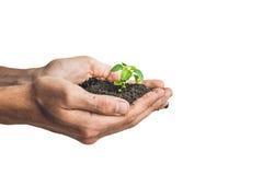 Руки держа молодое зеленое растение, изолированное на белизне Концепция экологичности, охраны окружающей среды Стоковое Фото