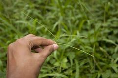 Руки держа траву Стоковое Фото