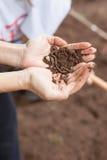 Руки держа earthworm Стоковое Изображение RF