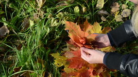 Руки делают декоративным цветком красочные листья дерева клена осени видеоматериал