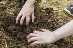 Руки женщины выкапывая землю Стоковые Изображения RF