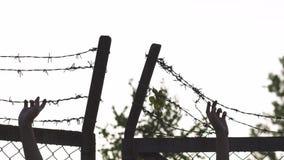 Руки женщины держа и хватая - металл колючей проволоки обнесет забором выравниваясь золотой заход солнца часа - знак клетки опасн сток-видео