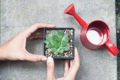 Руки женщины держа бак кактуса Стоковые Изображения