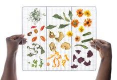 Руки женщины держа гриль с высушенными овощами Стоковые Изображения RF