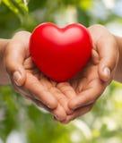 Руки женщины приданные форму чашки показывая красное сердце Стоковая Фотография