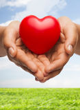 Руки женщины приданные форму чашки показывая красное сердце Стоковые Изображения RF