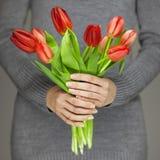Руки женщины при совершенное искусство ногтя держа розовую весну цветут тюльпаны, чувственная съемка студии Стоковое Изображение RF
