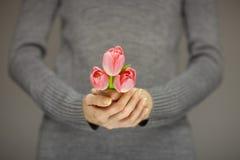 Руки женщины при совершенное искусство ногтя держа розовую весну цветут тюльпаны, чувственная съемка студии Стоковые Фотографии RF