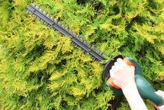 Руки женщины с газом привели триммер в действие изгороди Стоковые Фотографии RF