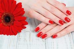 Руки женщины с красивым красным маникюром на ногтях Стоковые Изображения