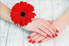 Руки женщины с красивым красным маникюром на ногтях Стоковое Фото