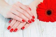 Руки женщины с красивым красным маникюром на ногтях Стоковые Изображения RF