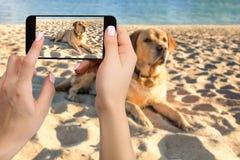Руки женщины с передвижным сотовым телефоном для того чтобы принять фото собаки labrador лежа на пляже Стоковое фото RF