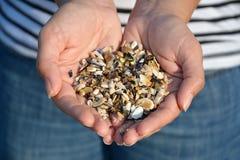 Руки женщины с seashells стоковое фото rf