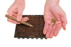 руки засаживая семена Стоковая Фотография RF