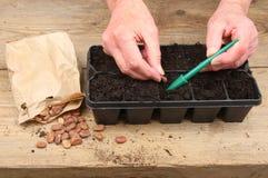 руки засаживая семена Стоковые Фотографии RF