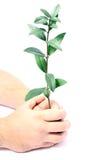 Руки и ветвь человека с зеленым цветом стоковая фотография