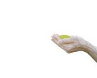 Руки концепции экологичности двойной экспозиции человеческие держа большое дерево завода Стоковые Фото