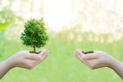 Руки концепции экологичности двойной экспозиции человеческие держа большое дерево завода Стоковая Фотография RF