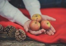 Руки маленькой девочки ребенка pinky держа желтые и красные свежие сочные яблока на красном обруче шотландки близко к strobiles в Стоковые Изображения