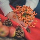 Руки маленькой девочки ребенка pinky держа одичалые ягоды желтые и красные свежие сочные яблоки на красном обруче шотландки близк Стоковые Фото