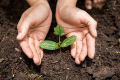 Руки молодой женщины засаживая деревце дерева Стоковая Фотография RF