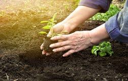 Руки пожилые женщины Стоковая Фотография