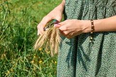 Руки пшеницы схода и вырезывания молодой женщины на поле стоковые изображения rf