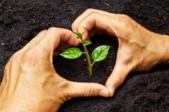 Руки растя дерево стоковое фото rf