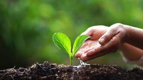 2 руки растя молодое зеленое растение видеоматериал