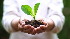 2 руки растя молодое зеленое растение акции видеоматериалы