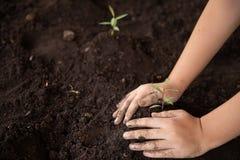 Руки ребенка держа и заботя молодое зеленое растение, саженцы растут от обильной почвы, засаживая деревья, стоковая фотография rf