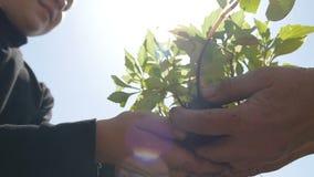 Руки ребенка который принял завод от рук пожилой персоны сток-видео