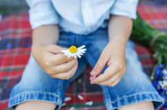 Руки ребенк держа красивую маргаритку Мальчик делает желание Стоковое Изображение RF