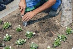 Руки садовника с садовыми инструментами выкапывают засаживая отверстия Стоковые Фотографии RF