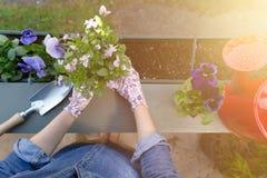 Руки садовников засаживая цветки в баке с грязью или почву в контейнере на саде балкона террасы o стоковые изображения