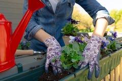 Руки садовников засаживая цветки в баке с грязью или почву в контейнере на саде балкона террасы o стоковые изображения rf