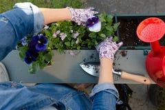 Руки садовников засаживая цветки в баке с грязью или почву в контейнере на саде балкона террасы o стоковые фотографии rf