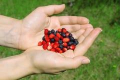 Руки с одичалыми ягодами Стоковое Изображение RF