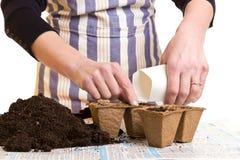 Руки с семенами, почвой и баками Стоковое Фото