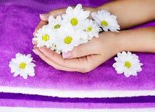 Руки с цветками стоковое изображение rf