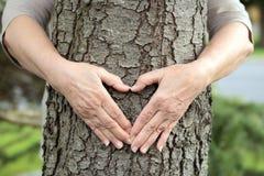 Руки формируя сердце на дереве Стоковые Изображения