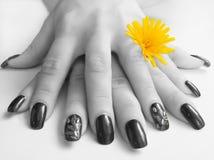 руки цветка Стоковые Фотографии RF