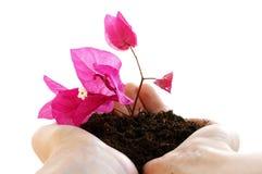 руки цветков Стоковые Фото
