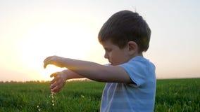 Руки чистки милого ребенк в зеленой траве против розового горизонта в восходе солнца акции видеоматериалы