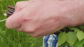 Руки ` s человека связывают ветви березы делая веники для сауны сток-видео