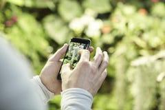 Руки ` s человека взгляда конца-вверх используя мобильный телефон, принимая фото цветков деревьев и вычисляя по маcштабу на экран Стоковые Изображения